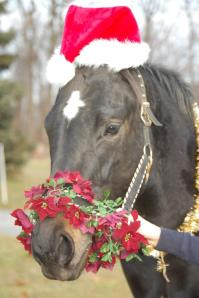 Photo courtesy of Off The Track Thoroughbred Rescue and their public Facebook Page