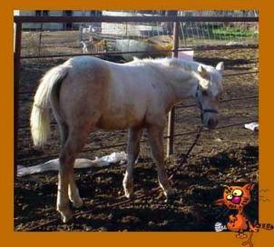Large Animal Protection Society | chestercountyramblings