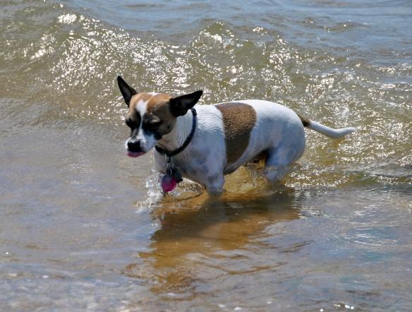 swimming dog, East Hampton, NY