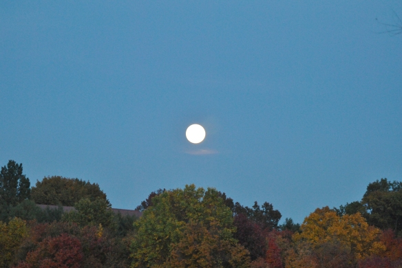 moon over immaculata